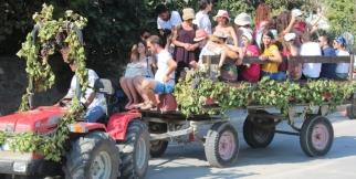 17. Bozcaada Bağbozumu Kültür ve Sanat Festivali- Bağbozumu ve temsili olarak küfelerle üzümlerin getirilişi