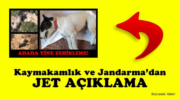 Hayvan ölümleriyle ilgili Kaymakam ve Jandarma'dan açıklama!
