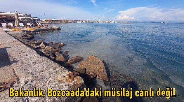 Bakanlık: Müsilaj Bozcaada'da üremiyor!