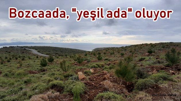 Bozcaada'ya son 4 yılda 30 binin üzerinde fidan dikildi